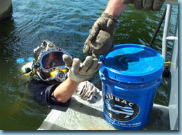 Diving Services Incorporated Crack And Leak Repair